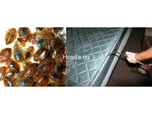 Bed Bug Eradication And Pest Control Services in Lagos - 1