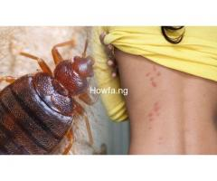 Professional Bed Bugs Fumigation Services