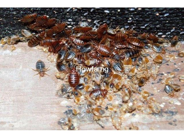 Lagos Best Bed Bugs Fumigation Services - 1