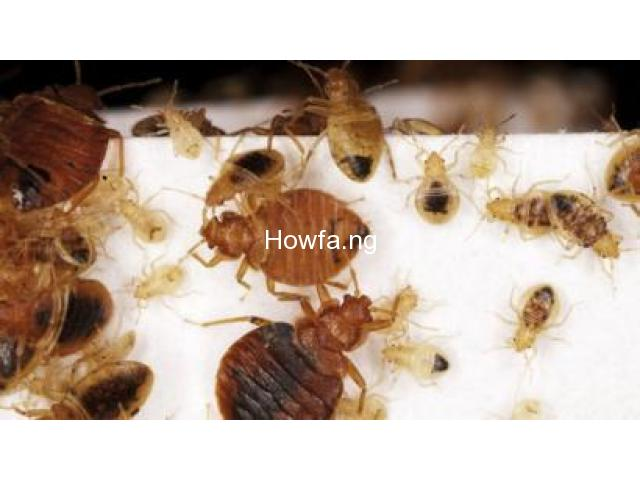 Treating Your Bed Bugs Issues Once And For All - 1