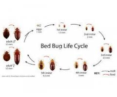 Professional bed bug solutions in Lagos Nigeria