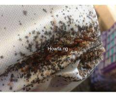What Are Possible Solutions To Bed Bugs By +2347033491967
