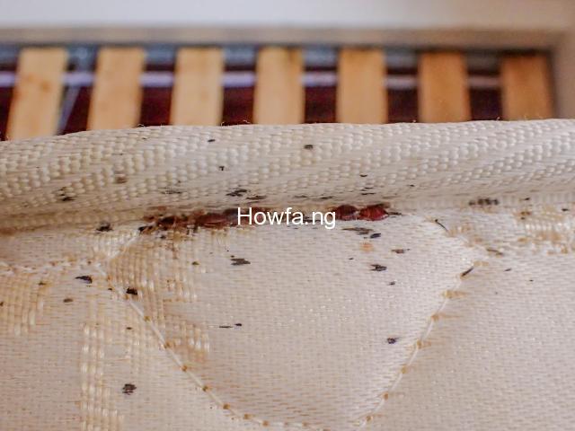 Bed Bug Fumigation Services In Lagos Nigeria - 1