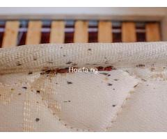 Bed Bug Fumigation Services In Lagos Nigeria