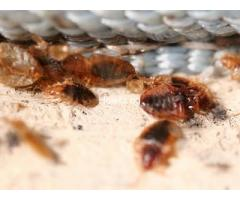 Professional Bed Bug Treatment In Lagos/ Nigeria